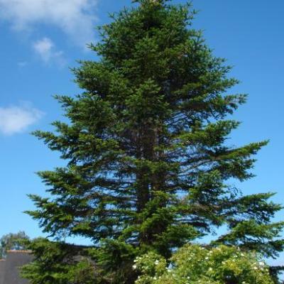 Abattage & élagage arbres