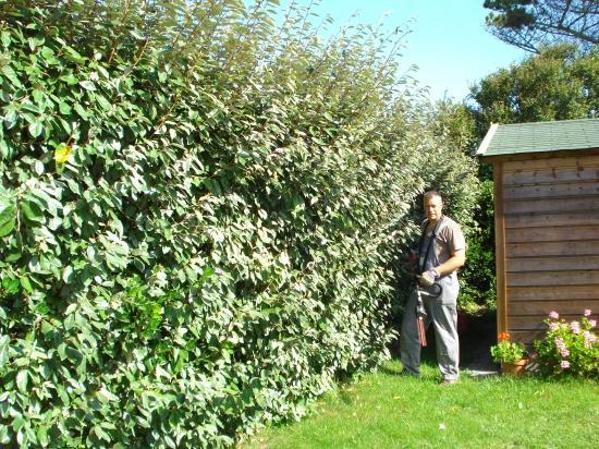 divers travaux de jardin