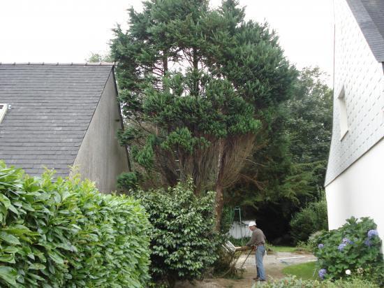 abattage arbre cyprès par démontage